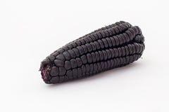 Peruviaans purper graan (maiz morado), dat hoofdzakelijk wordt gebruikt om sap voor te bereiden riep chichamorada stock foto