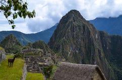 Peruviaanse lama in Machu Picchu Stock Foto