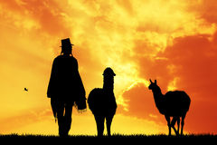 Peruviaanse mens met lama's bij zonsondergang Stock Foto's
