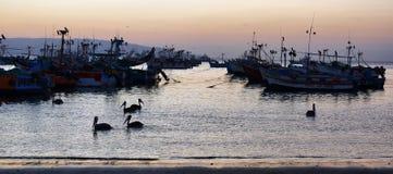 Peruviaanse pelikaan in Paracas, Peru Royalty-vrije Stock Afbeeldingen
