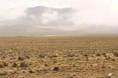 Peruviaanse rijweg royalty-vrije stock foto