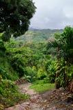 Peruvian Amazon Jungle (Tarapoto). Roadway into the Jungle. Tarapoto is at the tip of the Peruvian Amazon Jungle Stock Photos