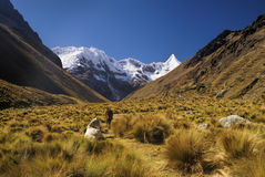 Peruvian Andes. Horses grazing in valley between high mountain peaks in Peruvian Andes stock photo