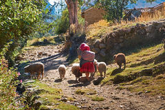 Peruvian Andes. Looking after livestock in a rural settlement in the Peruvian Andes, South America stock image