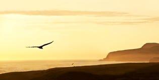 Peruvian Coastline, Paracas National Reserve Royalty Free Stock Photography
