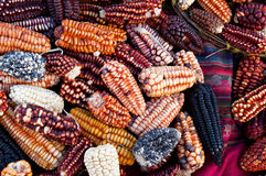 Peruvian Corn Stock Photo