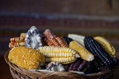 Peruvian Corn Royalty Free Stock Photo