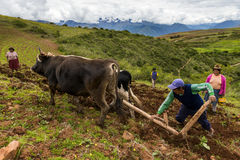 Peruvian family plowing the land near Maras, Peru Royalty Free Stock Photo
