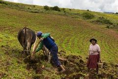 Peruvian family plowing the land near Maras, Peru. Maras, Peru - December 23, 2013: A Peruvian family plowing the land close to the Moray Inca Terraces, near Royalty Free Stock Photo