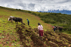 Peruvian family plowing the land near Maras, Peru Stock Photography