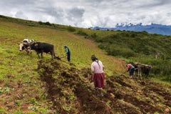 Peruvian family plowing the land near Maras, Peru. Maras, Peru - December 23, 2013: A Peruvian family plowing the land close to the Moray Inca Terraces, near Stock Photography