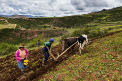 Peruvian family plowing the land near Maras, Peru Royalty Free Stock Photography