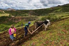Peruvian family plowing the land near Maras, Peru. Maras, Peru - December 23, 2013: A Peruvian family plowing the land close to the Moray Inca Terraces, near Royalty Free Stock Photography