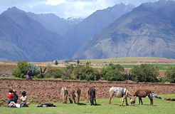 Peruvian Farmers Royalty Free Stock Photo
