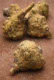 Peruvian ginseng or maca (Lepidium meyenii) Royalty Free Stock Image