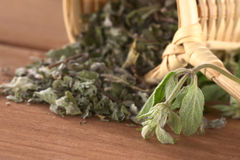 Peruvian Herb Called  Muna Royalty Free Stock Images