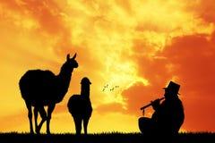 Peruvian lamas at sunset Stock Photo