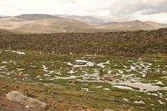 Peruvian Landscape Royalty Free Stock Photography