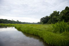 Peruvian Landscape. A view of the river at Tambopata Province in the Amazon Royalty Free Stock Photography