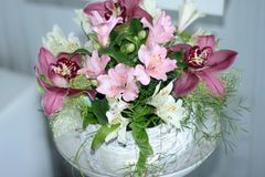 Peruvian lily, lily of the Incas, Alstroemeria with light pink flowers stock photo