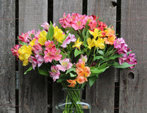 Peruvian Lily in Vase Stock Photo