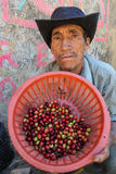Peruvian man shows a basket with coffee cherries Stock Photos