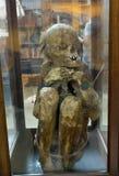 Peruvian Mummies  bodies inside Carmo Convent Stock Photos
