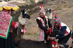 Peruvian peasants and their llamas stock photo