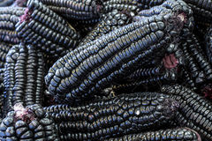 Peruvian purple corn, which is mainly used to prepare juice (chicha) or a jelly-like dessert. Royalty Free Stock Photo