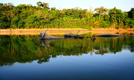 Peruvian river. In jungles Stock Image