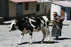 Peruvian shepherd Royalty Free Stock Images