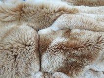 Peruvian Vicuna woolen fabric. Background stock photography