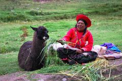 Peruvian woman feeding llama near Cusco in Peru. A Peruvian woman in traditional clothing and hat sits on the ground feeding grass to a black llama Royalty Free Stock Image