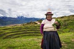 Peruvian woman near Maras, Sacred Valley, Peru. Maras, Peru - December 23, 2013: Peruvian woman in the Moray Inca Terraces, near Maras, in the Sacred Valley Stock Images