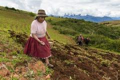 Peruvian woman sowing a field near Maras, in Peru. Maras, Peru - December 23, 2013: Peruvian woman sowing a field near Maras, in Peru Stock Photo