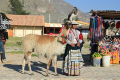 Peruvian woman in traditional dress standing with her Lama and C royalty free stock image