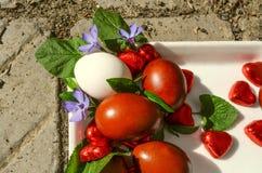 Pervinca dos ovos da páscoa e das flores com heartsdo chocolate Imagens de Stock