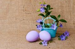 Pervincas bonitas na cesta com ovos da páscoa Imagem de Stock