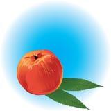 Perzik vector illustratie