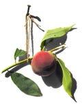 Perzik stock afbeeldingen