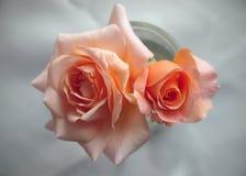 Perzik gekleurde rozen voor huwelijksuitnodiging Royalty-vrije Stock Fotografie