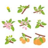 Perzik - knop, bloesem, bloem, blad, fruit Vlakke hand getrokken vector vector illustratie