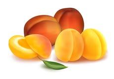 Perziken en abrikozen. Royalty-vrije Stock Afbeeldingen