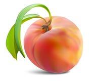 Perziken en bladeren royalty-vrije illustratie