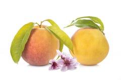 Perziken met bladeren en bloemen op wit worden geïsoleerd dat Royalty-vrije Stock Foto