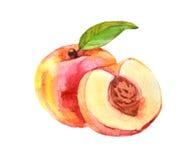 Perzikfruit met blad, waterverfillustratie royalty-vrije stock foto
