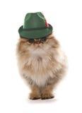 Perzische kat die de Beierse hoed van het bierfestival dragen royalty-vrije stock fotografie