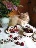 Perzische kat die op een lijst met kersenpastei en bloemen liggen Stock Afbeeldingen