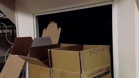 Perzische kat die van doos springen stock videobeelden