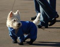 Pes Stockbild